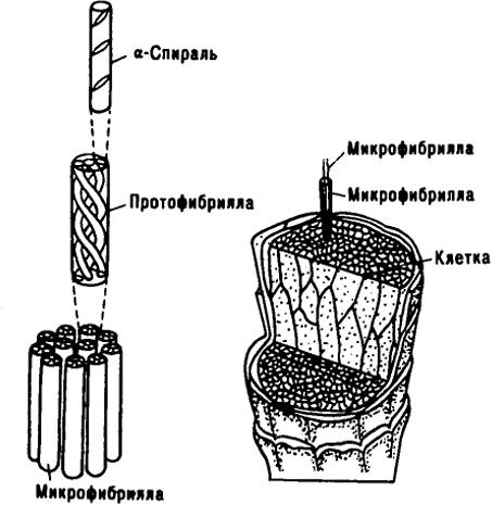 Практическое Руководство По Физикохимии Волокнообразующих Полимеров
