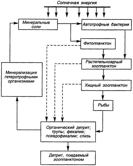 Упрощенная схема круговорота
