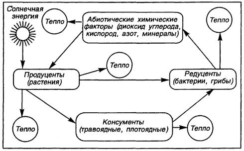Общая схема пищевой цепи