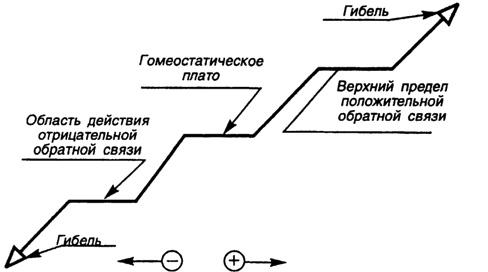 Схема гомеостатического плато