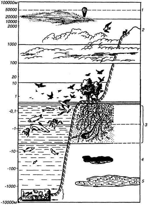 организмов в биосфере: 1