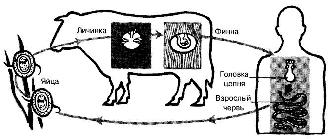 как выглядят мясо больного толстолобика