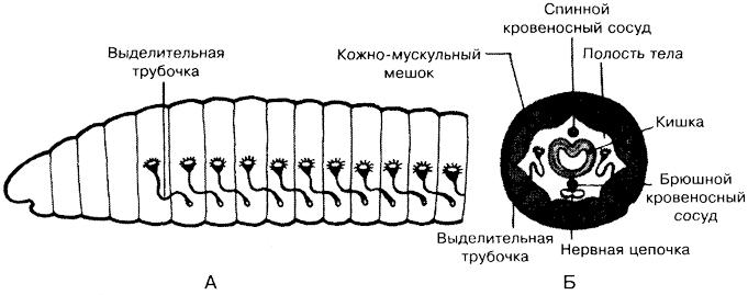 B1774p184-1.jpg