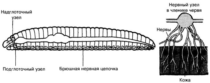 система дождевого червя.