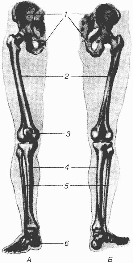Кость Полулунная