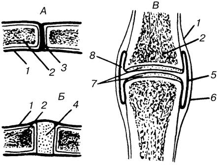 Виды соединений костей (схема)