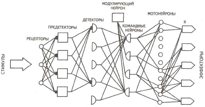 Блок-схема концептуальной